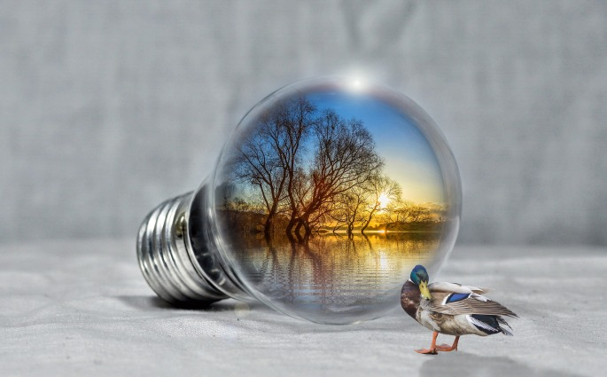 duck-light